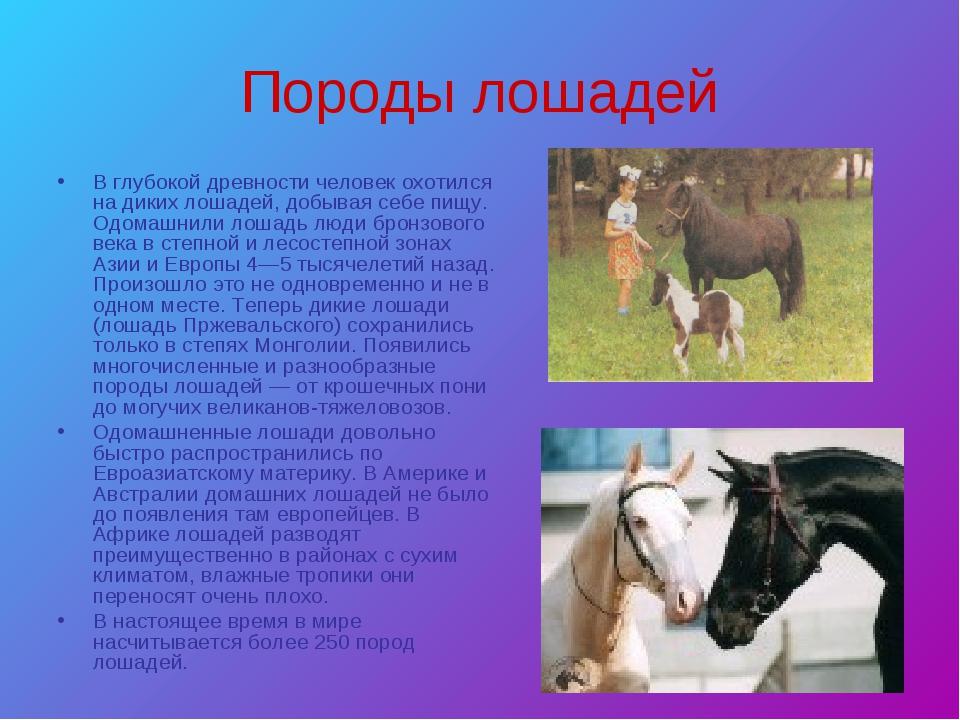 Породы лошадей В глубокой древности человек охотился на диких лошадей, добыва...