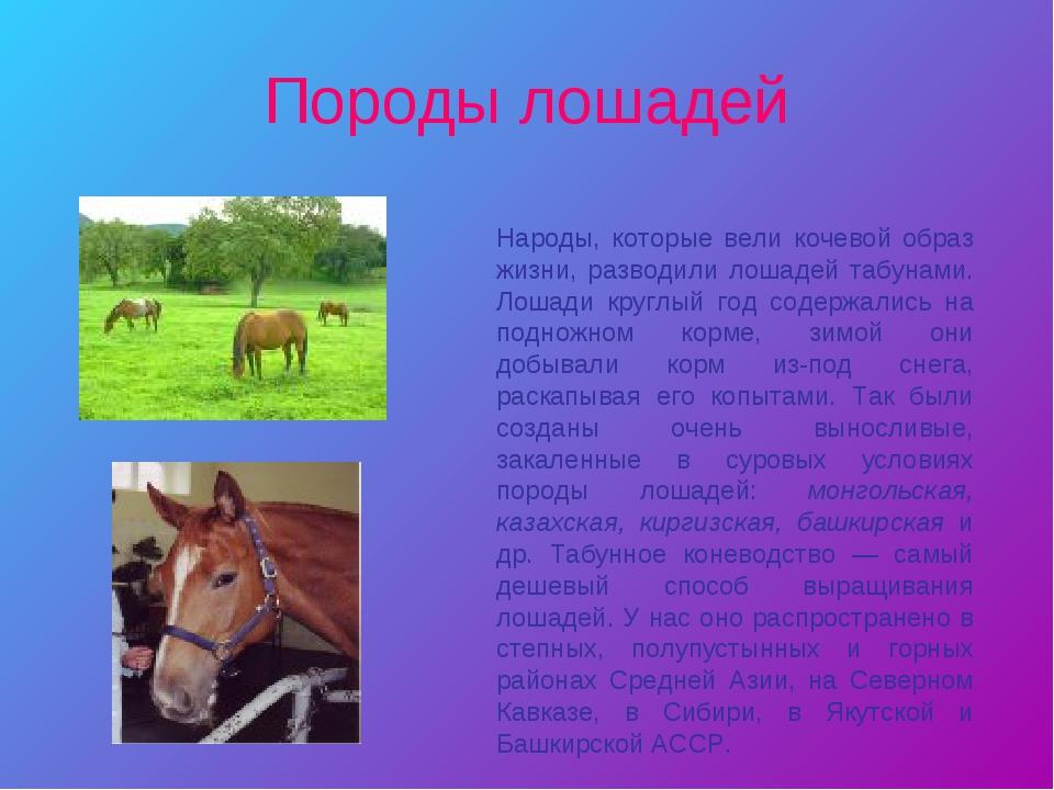 Породы лошадей Народы, которые вели кочевой образ жизни, разводили лошадей та...