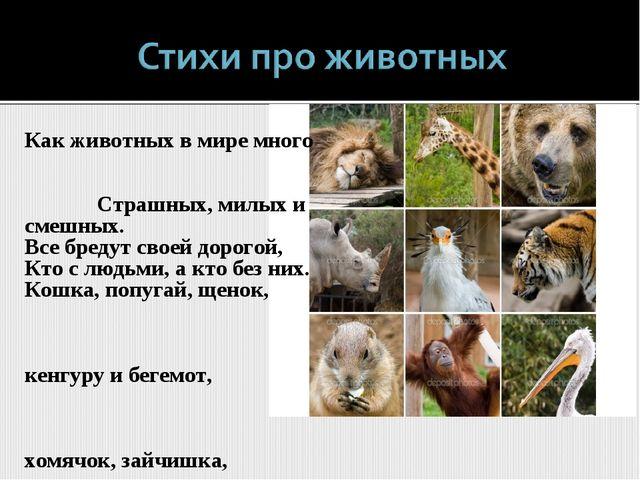 Как животных в мире много Страшных, милых и смешных. Все бредут своей дорогой...