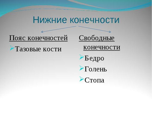 Нижние конечности Пояс конечностей Тазовые кости Свободные конечности Бедро Г...