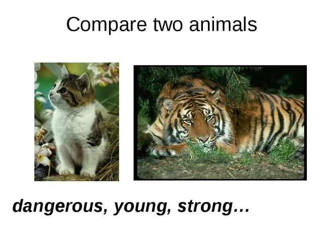 Compare two animals dangerous, young, strong…