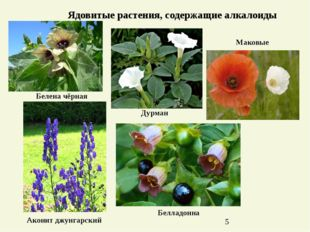Ядовитые растения, содержащие алкалоиды Маковые Дурман Белладонна Белена чёрн