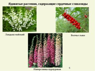 Ядовитые растения, содержащие сердечные гликозиды Ландыш майский Наперстянка