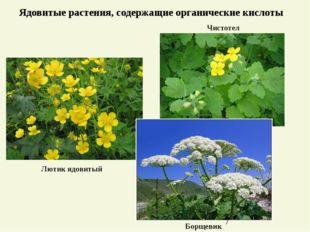 Ядовитые растения, содержащие органические кислоты Чистотел Борщевик Лютик яд