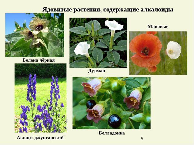 Ядовитые растения, содержащие алкалоиды Маковые Дурман Белладонна Белена чёрн...