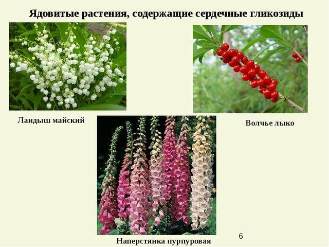 Ядовитые растения, содержащие сердечные гликозиды Ландыш майский Наперстянка...