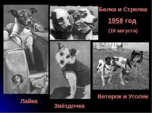Белка и Стрелка 1958 год (19 августа) Лайка Звёздочка Ветерок и Уголек
