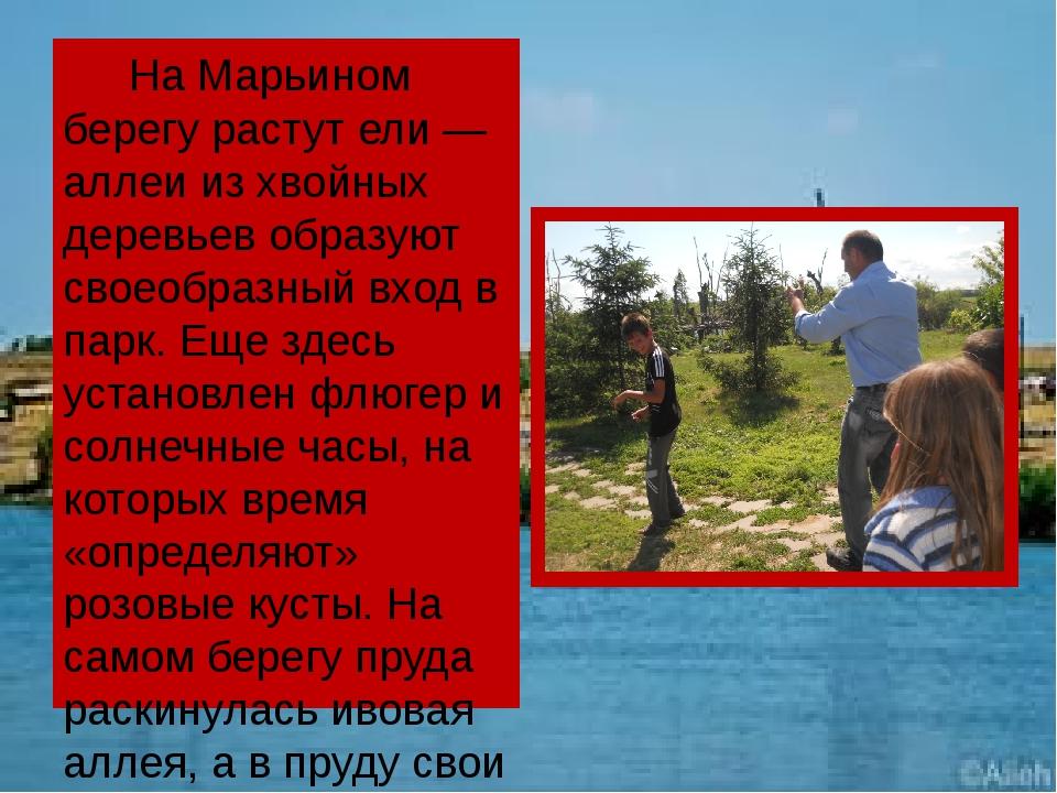 На Марьином берегу растут ели— аллеи из хвойных деревьев образуют своеобраз...