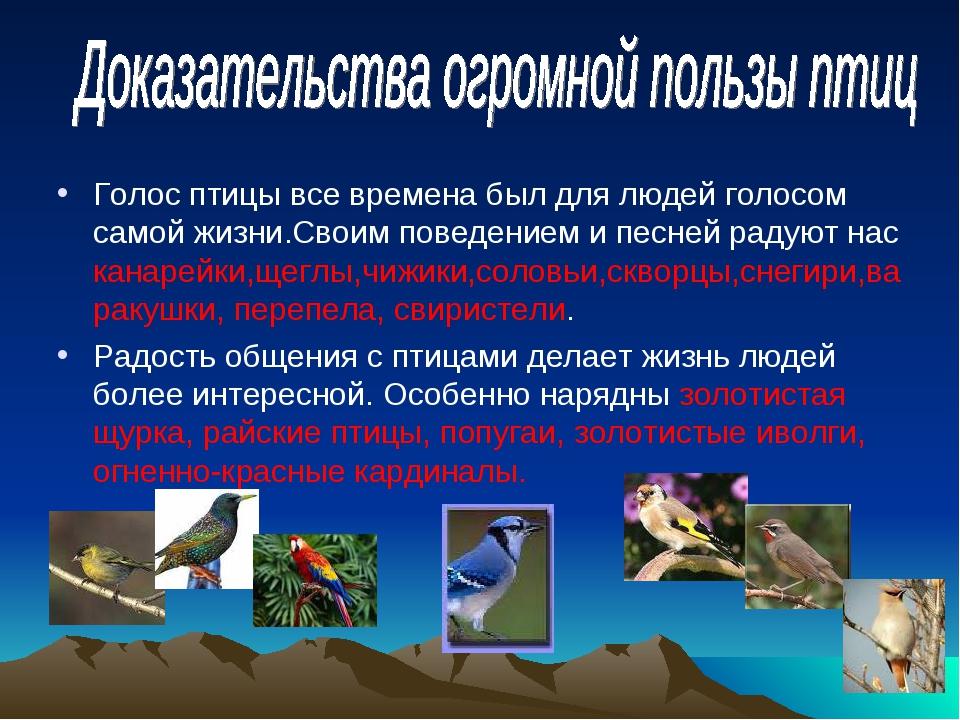 Голос птицы все времена был для людей голосом самой жизни.Своим поведением и...