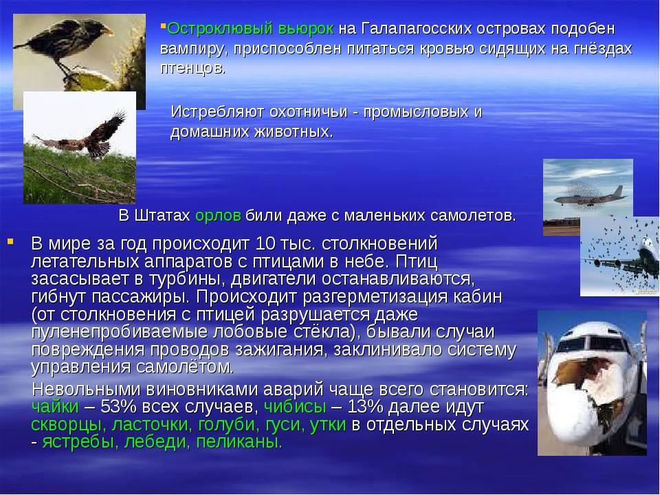 В мире за год происходит 10 тыс. столкновений летательных аппаратов с птицам...