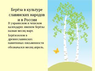 Берёза в культуре славянских народов и в России В украинском и чешском календ