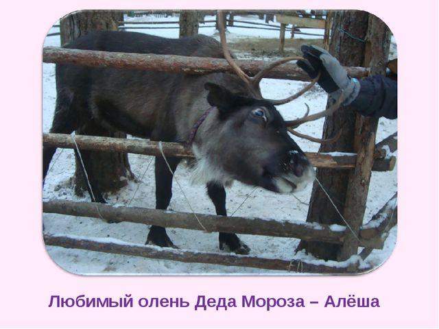 Любимый олень Деда Мороза – Алёша