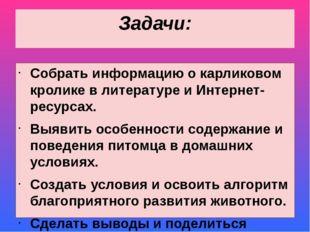 Задачи: Собрать информацию о карликовом кролике в литературе и Интернет-ресур