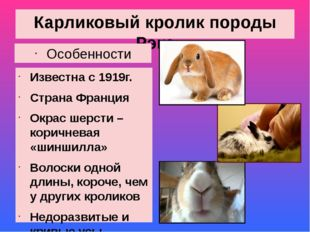 Карликовый кролик породы Рэкс Особенности Известна с 1919г. Страна Франция Ок