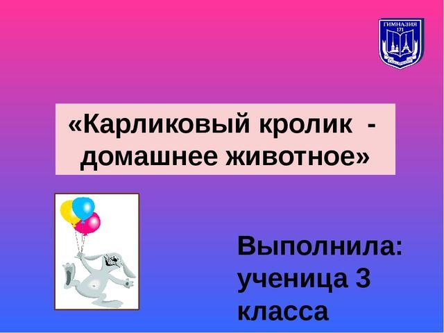 «Карликовый кролик - домашнее животное» Выполнила: ученица 3 класса Кулик Ксе...