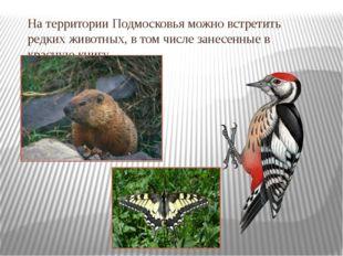 На территории Подмосковья можно встретить редких животных, в том числе занесе