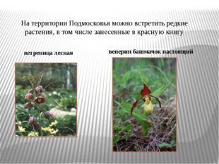 На территории Подмосковья можно встретить редкие растения, в том числе занесе