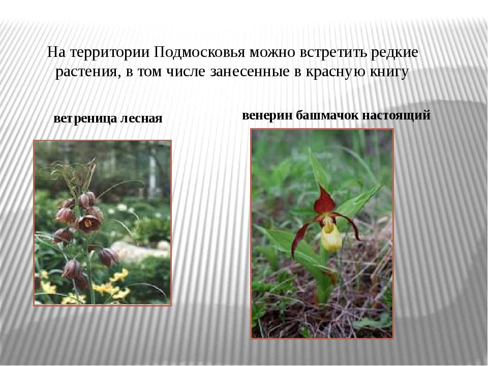 На территории Подмосковья можно встретить редкие растения, в том числе занесе...