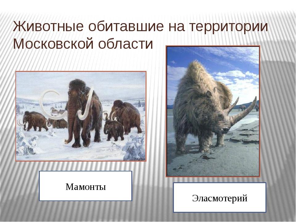 Животные обитавшие на территории Московской области Эласмотерий Мамонты