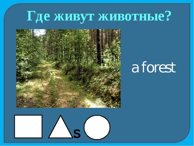 Где живут животные? a forest S