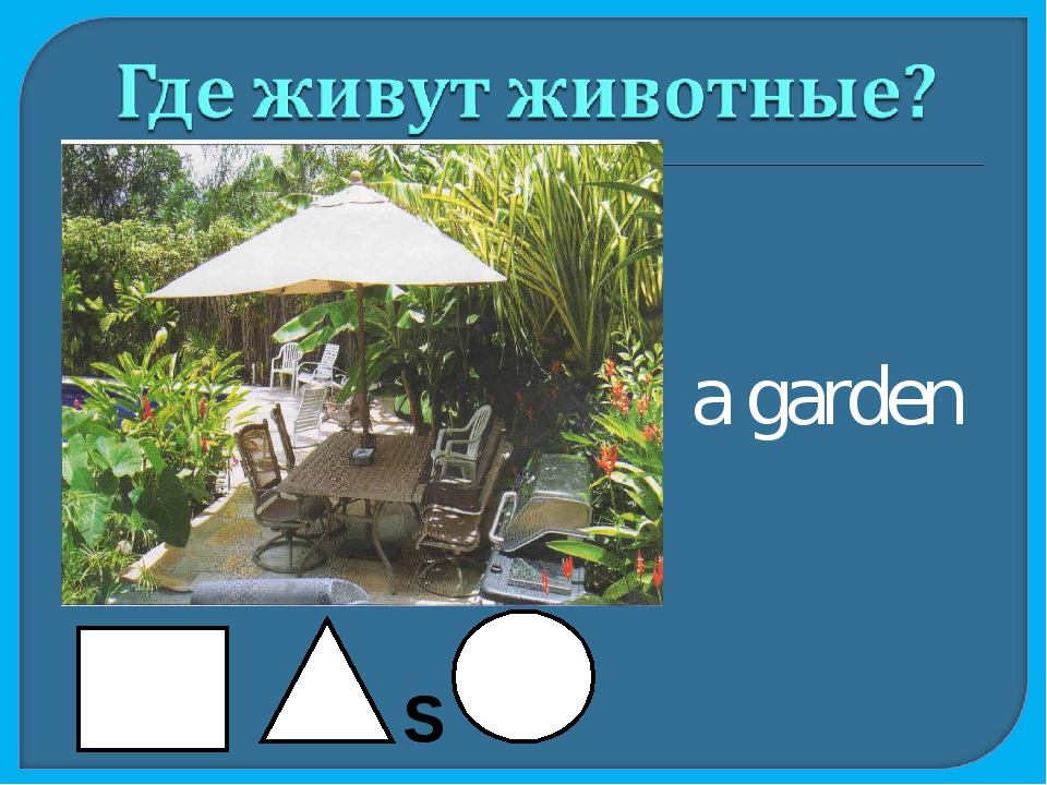 a garden S