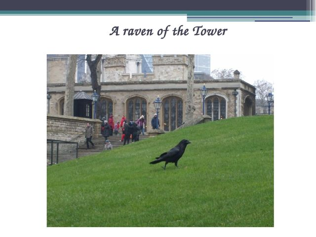 A raven of the Tower