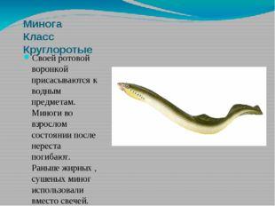 Минога Класс Круглоротые Своей ротовой воронкой присасываются к водным предме