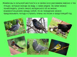 Живём мы в сельской местности и в своём эссе расскажем именно о тех птицах,