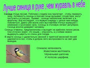 Синица птица лесная. Поближе к людям она прилетает , чтобы пережить зиму. Акт
