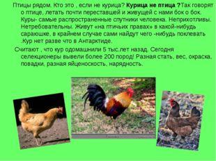 Птицы рядом. Кто это , если не курица? Курица не птица ?Так говорят о птице,