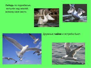 Лебедь по поднебесью, мотылёк над землёй; всякому своё место. Дружные чайки и
