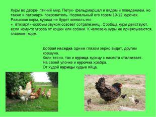 Куры во дворе- птичий мир. Петух- фельдмаршал и видом и поведением, но также
