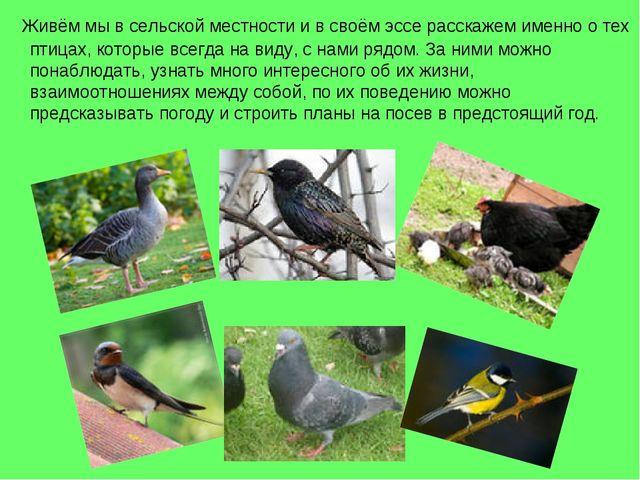 Живём мы в сельской местности и в своём эссе расскажем именно о тех птицах,...
