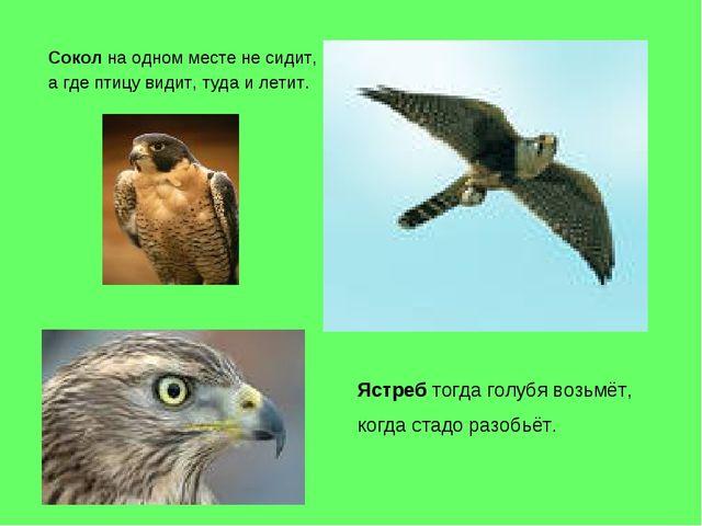 Сокол на одном месте не сидит, а где птицу видит, туда и летит. Ястреб тогда...