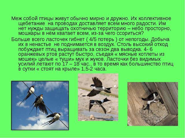 Меж собой птицы живут обычно мирно и дружно. Их коллективное щебетание на про...