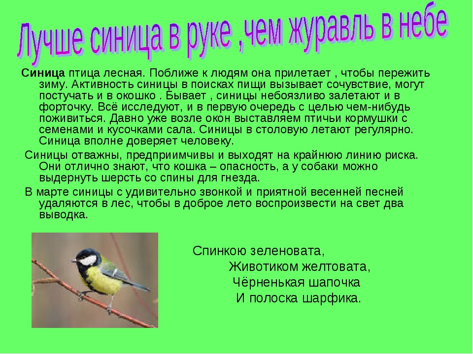 Синица птица лесная. Поближе к людям она прилетает , чтобы пережить зиму. Акт...