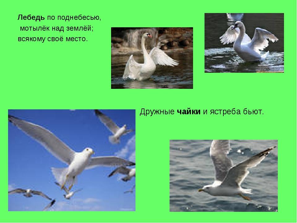 Лебедь по поднебесью, мотылёк над землёй; всякому своё место. Дружные чайки и...