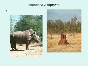 Носороги и термиты .