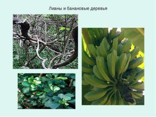Лианы и банановые деревья