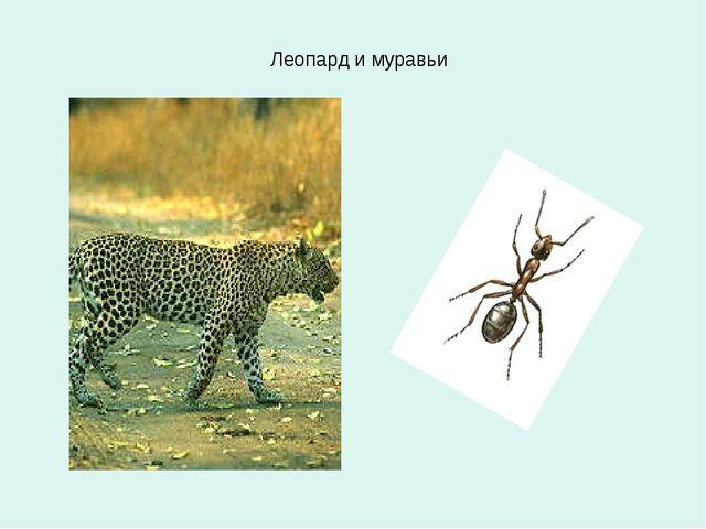 Леопард и муравьи