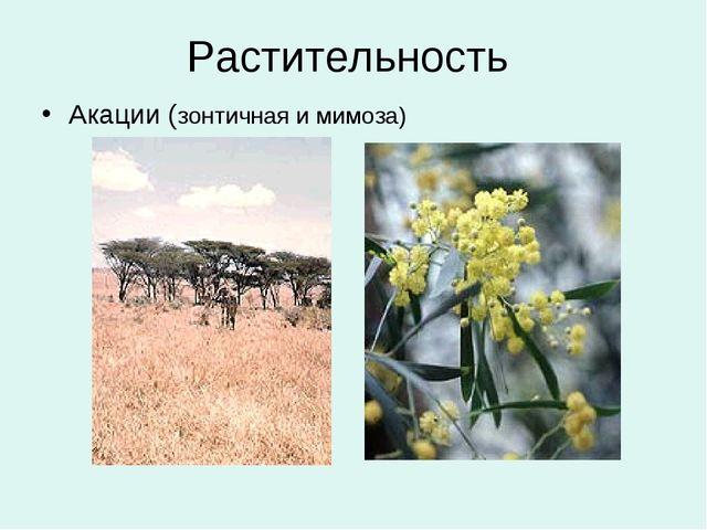 Растительность Акации (зонтичная и мимоза)