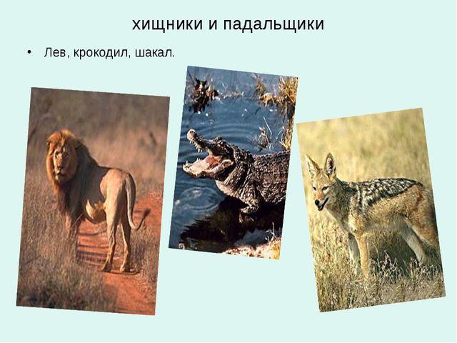 хищники и падальщики Лев, крокодил, шакал.