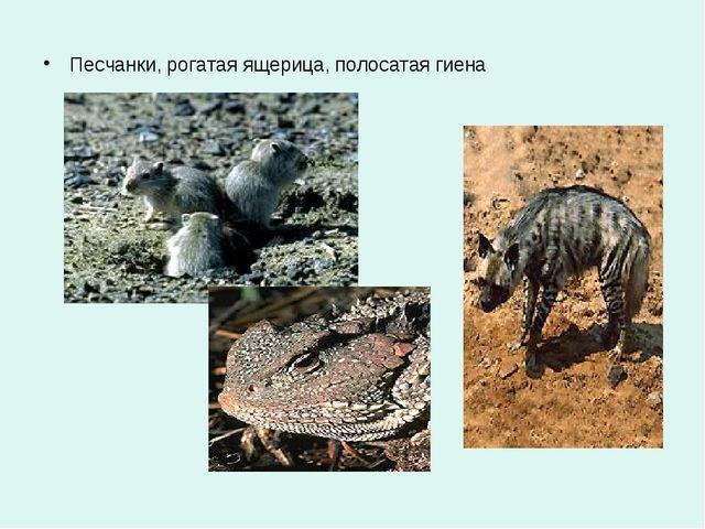 Песчанки, рогатая ящерица, полосатая гиена