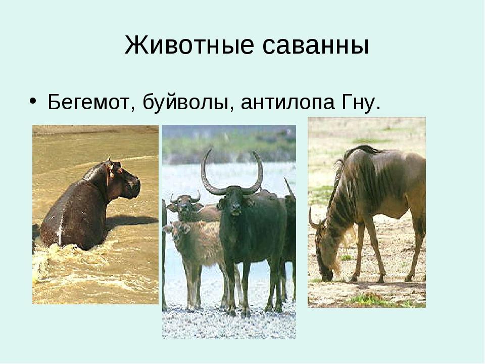 Животные саванны Бегемот, буйволы, антилопа Гну.