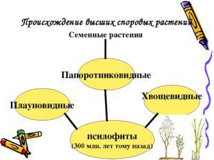Происхождение высших споровых растений псилофиты (300 млн. лет тому назад) Пл
