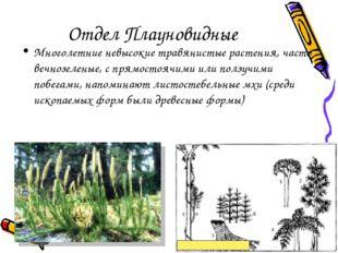 Отдел Плауновидные Многолетние невысокие травянистые растения, часто вечнозел