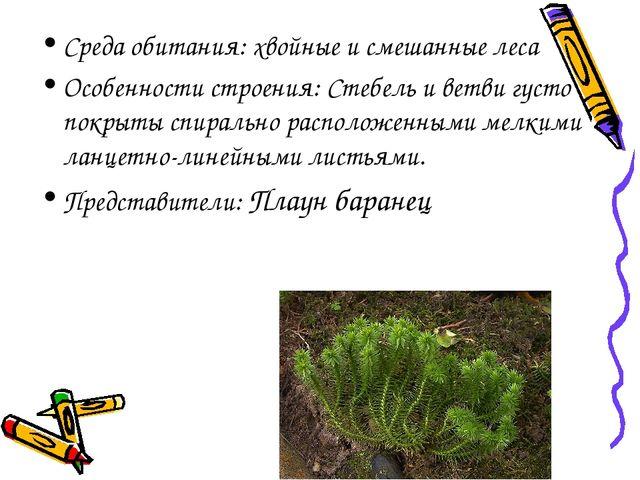 Среда обитания: хвойные и смешанные леса Особенности строения: Стебель и ветв...