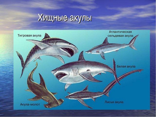 л.н.толстой акула 3 класс