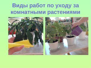 Виды работ по уходу за комнатными растениями
