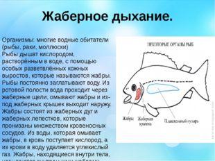 Жаберное дыхание. Организмы: многие водные обитатели (рыбы, раки, моллюски) Р